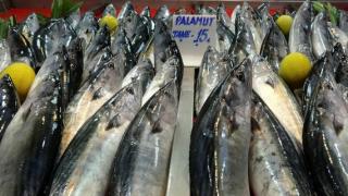 Balık pazarında bereket var! Balık fiyatları ne kadar?
