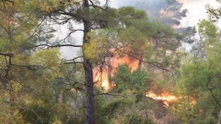 Antalya Kumluca'da dev yangın! Pakdemirli'den kritik açıklamalar: Bu sene 2 binden fazla yangın meydana geldi