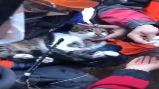 İzmir'de kurtarılan bir kedinin iç ısıtan görüntüleri
