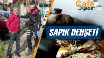 Edirne'de iğrenç olay! Yavru köpeklere cinsel istismar iddiasıyla gözaltına alındı