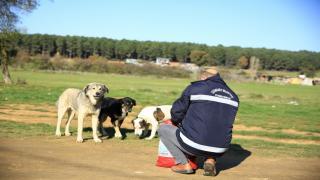 Çekmeköy Belediyesi sokak hayvanlarını unutmadı