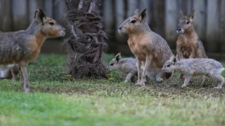 Bursa Hayvanat Bahçesi'nde dünyaya ''merhaba'' dediler