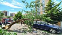 Çürüyen ağaç arabanın üstüne devrildi