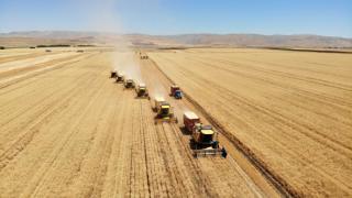 Muş'ta üretilen sertifikalı tohumlar Türkiye'nin dört bir tarafına gidiyor