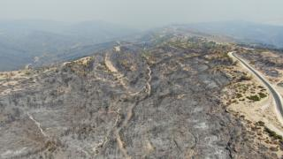 Manavgat'ta yanan ormanlık alanlar yeşilleniyor!