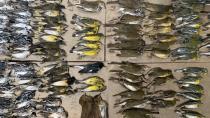 New York'ta yüzlerce kuş gökdelenlere çarparak öldü!