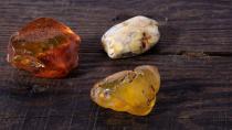 Kehribarın içinde bulundu: 100 milyon yaşında!