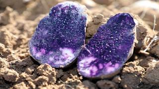 Sivas'ta üretilen şifa kaynağı topraktan çıkarıldı